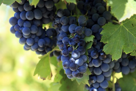 New Opportunities for Winemakers of Berdyansk Region – Combining History and Innovation